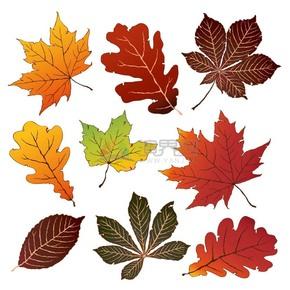 秋季手绘风落叶合集