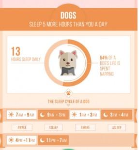[演界信息图表]可爱扁平清新图表-宠物们睡觉的习惯