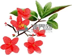 水彩風小紅花