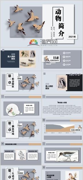 动物介绍、产品介绍、工作汇报灰色百搭扁平大气简约PPT模板