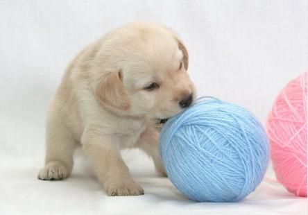 图片素材分享高清萌宠动物图片25张