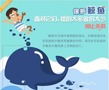 【演界信息图表】清新扁平-保护鲸鱼图片