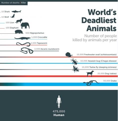 【演界信息图表】扁平-世界最致命的动物