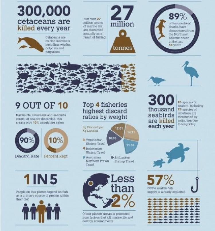 【演界网独家信息图表】扁平设计-海洋生物