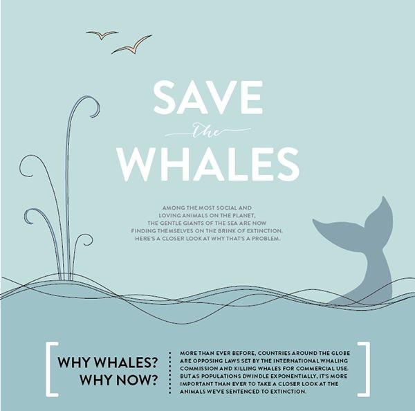 手绘-保护鲸鱼