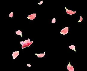 花瓣素材大图