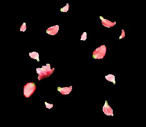 飘落的花瓣