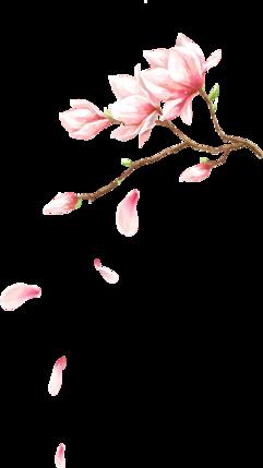 创意水彩手绘粉红色的桃花
