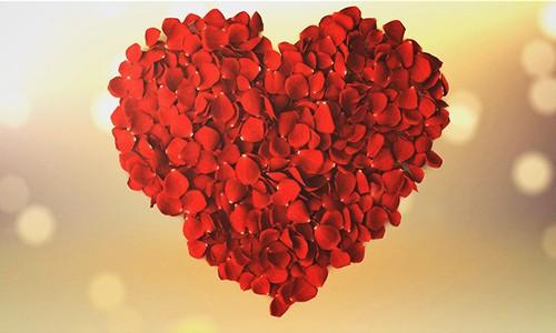 玫瑰花瓣浪漫婚礼开场片头视频ppt模板