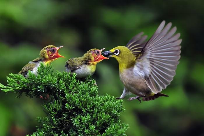 图片素材 野生动物园ppt模板 【图片分享计划】动物05-雏鸟  作品标签