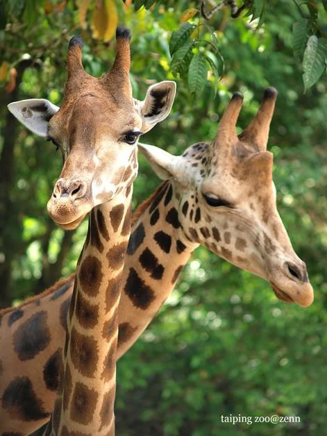 图片素材 野生动物园ppt模板 【图片分享计划】动物01鹿  作品标题