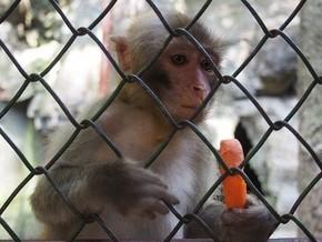 【图片分享计划】猴子