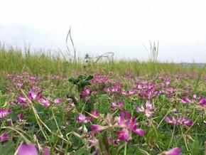 【图片分享计划】野花