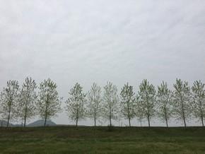 【图片分享计划】树