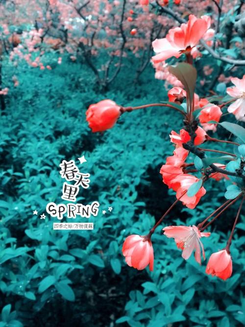 作品标题:【图片分享计划】春天里2