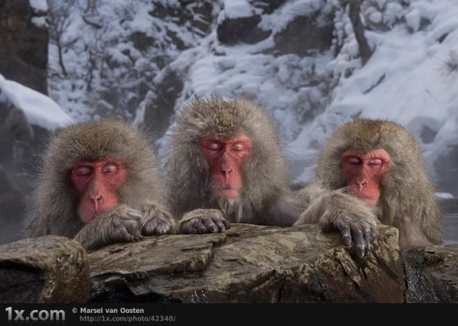 野生动物50 猩猩免费下载–演界网