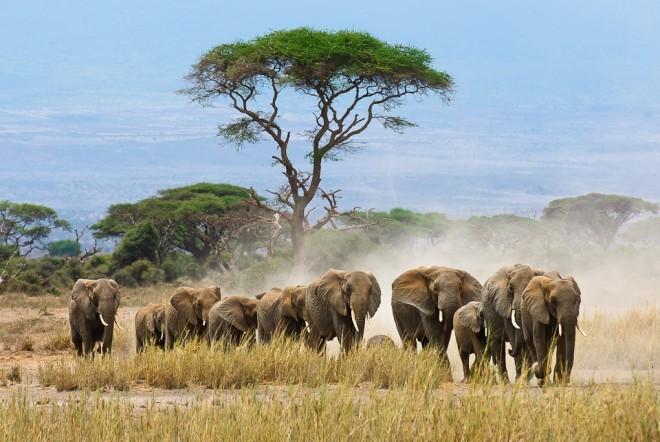 野生动物保护法图片素材