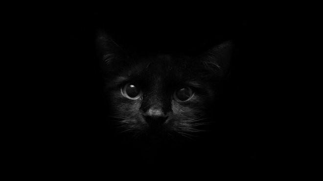 黑色高雅ppt模板 【海报分享计划】黑色背景图6-猫咪  黑色简约图片