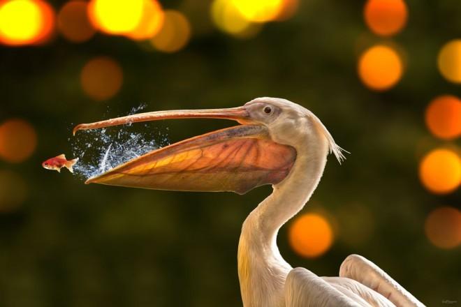 野生动物4 水鸟免费下载–演界网