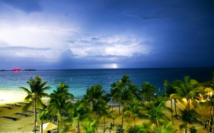 我要定制 商品标签: 海边椰树海景 模板类型: 静态模板 商品色调: 蓝