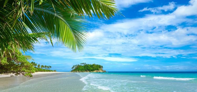 壁纸大海蓝天椰子树夏日