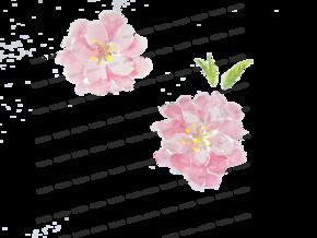 水彩-挑花[1图][透明背景][原创][可转售][可商用]