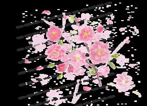水彩-桃花[1图][透明背景][原创][可转售][可商用]