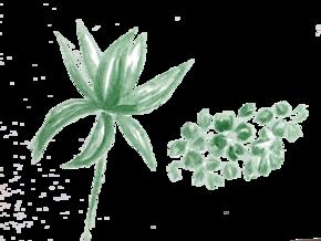 水彩-花[1图][透明背景][原创][可转售][可商用]