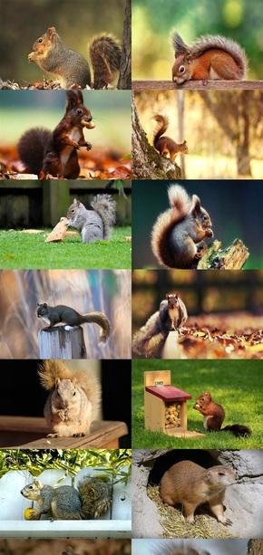 可爱松鼠壁纸图片