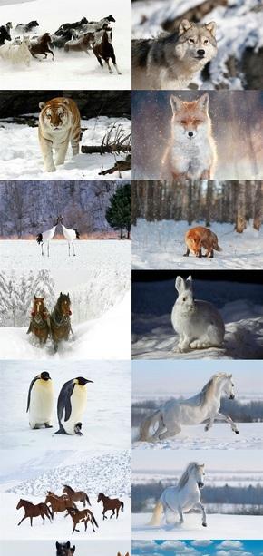 雪地动物背景图片