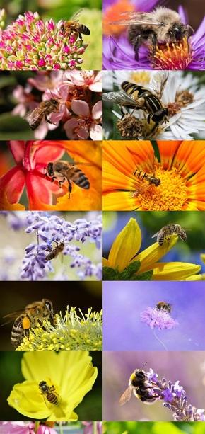 蜜蜂采蜜摄影素材