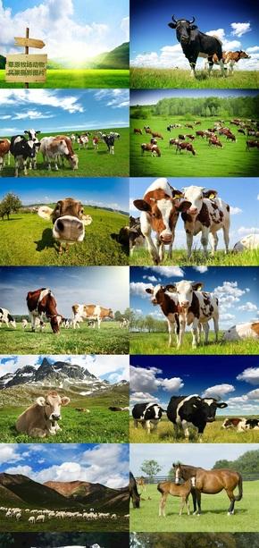 草原牧场动物风景摄影图片