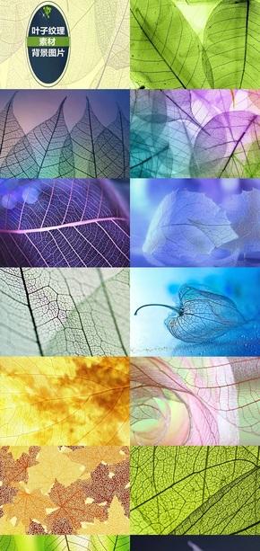叶子纹理素材背景图片