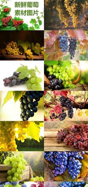 新鲜葡萄素材图片