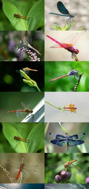 停留的蜻蜓高清壁纸