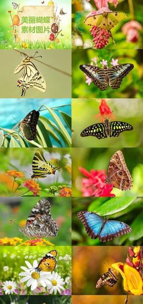 美丽蝴蝶素材图片