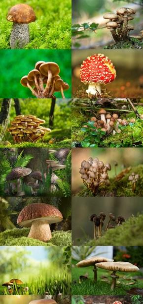 生长中的蘑菇素材图片