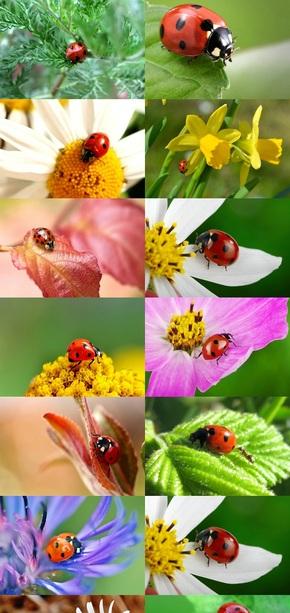 植物与瓢虫摄影素材图片