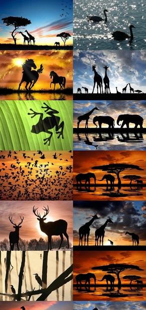 动物剪影高清图片