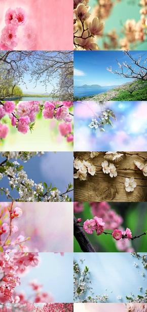 桃花素材背景图片