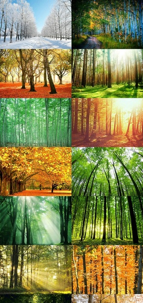 树林摄影风景图片