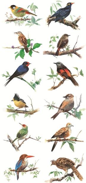 水彩花鸟素材图片