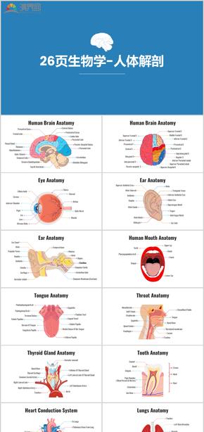 26页生物学人体解剖医疗图表数据图表商业图表分析蓝色图表资源营销数据统计动态图表